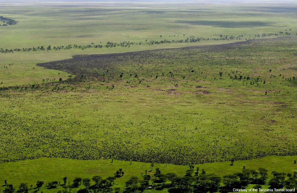 Ungulate Migration Images of Tanzania