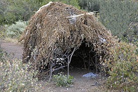 The hadzabe live in huts